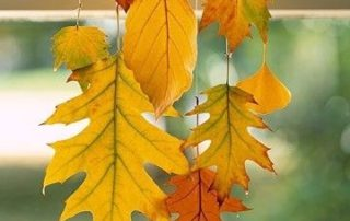 sfeerfoto_herfst_hangende bladeren